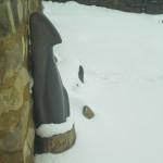 Le pingouin de Liny Brouns