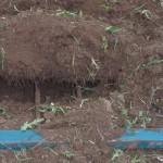 1- le sol est décompacté