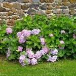 Des fleurs pour agrémenter vos flâneries