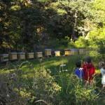 Les enfants observent les abeilles en écoutant les commentaires de leur papa apiculteur...