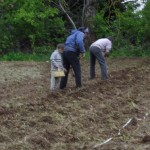 Plantation des pommes de terre en famille