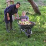 Ramassage de pommes en famille à Vailhac