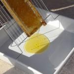 Voici le bon miel !