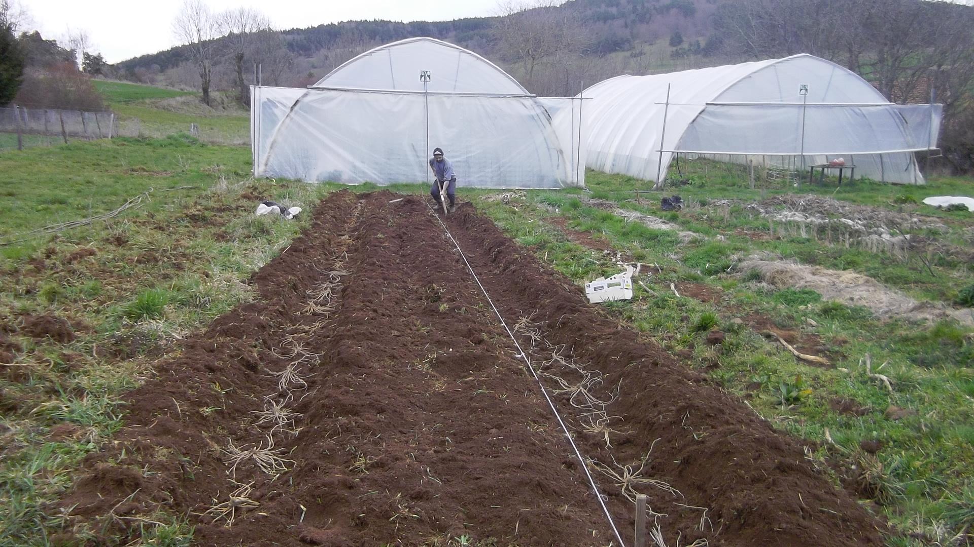Plantation des asperges à Vailhac