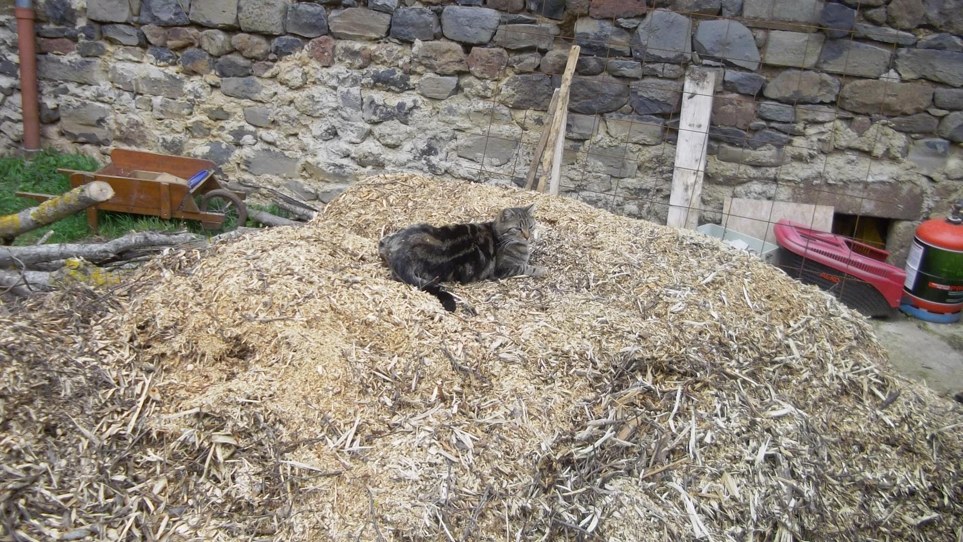 Notre chatte Minette sur le BRF